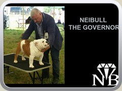 NEIBULL THE GOVERNOR